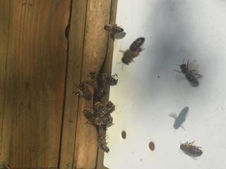 Bienen Rekorde