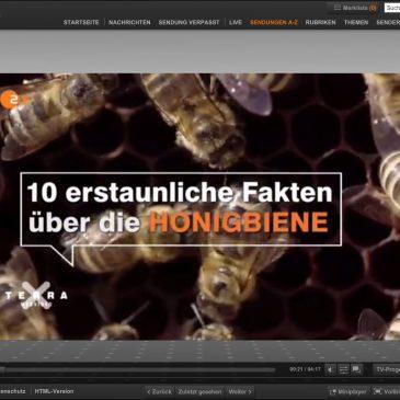 Bienen in Superzeitlupe