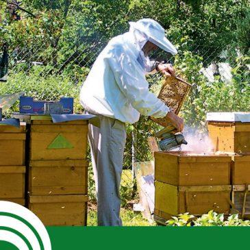 Broschüre Arbeitssicherheit bei der Bienenhaltung