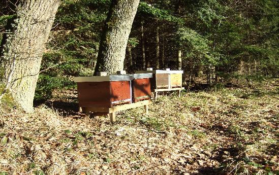 Bienen in den Wald